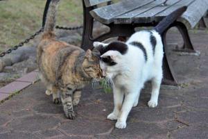 日比谷公園のベンチ猫