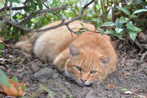 暑がる九月の猫 日比谷公園
