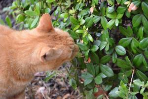 Ai-chan The Cat Licking Rain