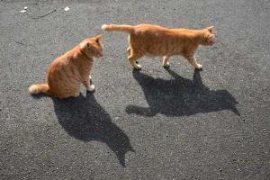 Cat Brothers and Their Shadows