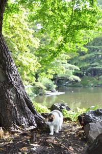 Sakura-chan The Cat Under Ginkgo Tree