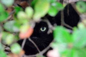 Autumn Bush Cat