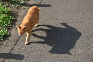 Ai-chan The Cat - Shadow Walking