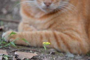 Ai-chan The Cat and Tiny Yellow Flowers