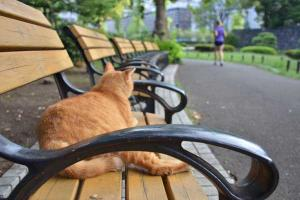 Ai-chan The Cat on Bench