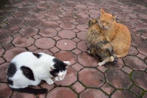 Three Cats Friends