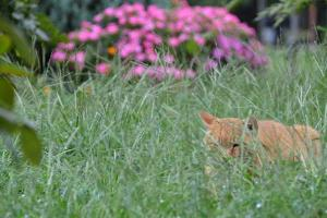 Cat in Overgrown Grass