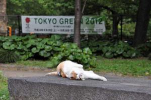Tokyo Green 2012 Promotion Cat