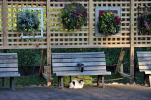 Cat, Bench and Hanging Flowers