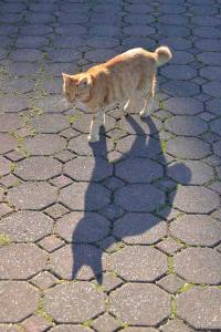 Chappy The Cat and Shadow