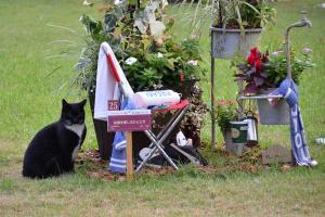 Cat and Flowers Displays