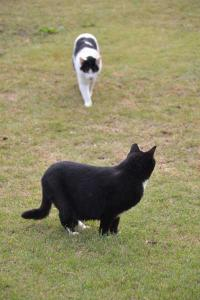 Cats On The Grass