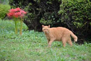 Cat and Spider Lilies