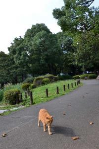 Ginger Cat Comes Walking