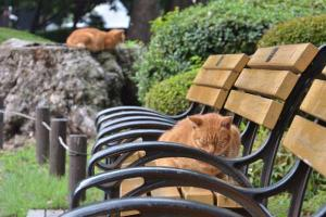 Ai-chan The Cat on Bench and Brother bon Tree Stump