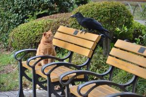 Ai-chan The Cat and a Crow (3/5)