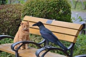 Ai-chan The Cat and a Crow (5/5)