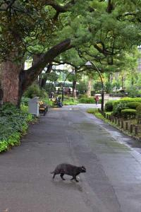 Black Cat Crossing Path