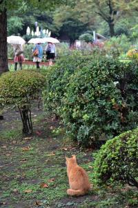 Cat on a Rainy Day