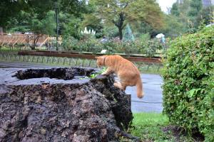 Cat Getting On Tree Stump