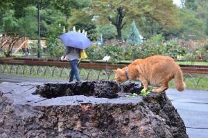 Cat On Tree Stump