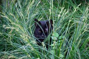 Cat In The Autumn Grass