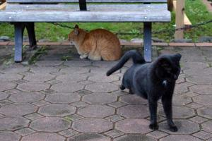 Black Cat Stretching - Good Morning!