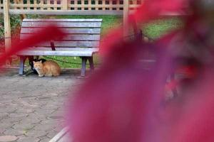 Bench Cats Through Red Flowers