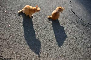 Cat Shadows