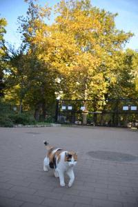 Cat and Platanus (Plane Tree) in Autumn Colors