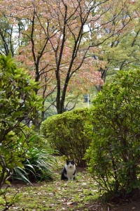 Cat Under The Dogwood Trees In Red