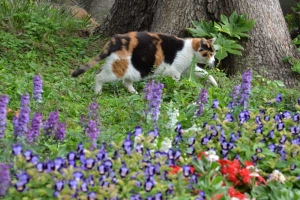 Calico and Flowers
