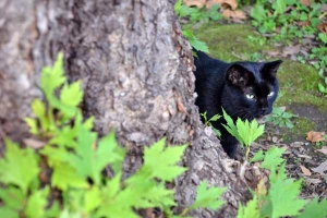 Black Cat Looking At Another Cat