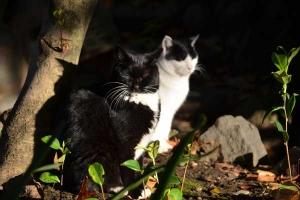 Cats In The Early Morning Sunlight