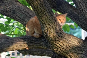 Cat in a Cockspur Coral Tree
