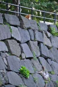 Ai-chan The Cat On The Wall-Top