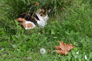 Calico Cat - Hints of Autumn