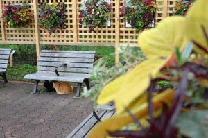 Cats Under Bench, Autumn Colors