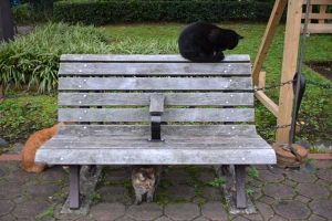 Cat Sitting On Bench-Top