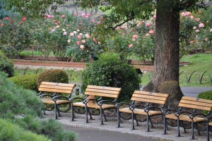 Bench Cat and Rose Garden