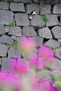 Wall Climbing Cat