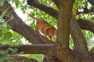 Cat Jumping Off The Tree