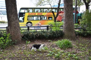 Hato Bus and Cat