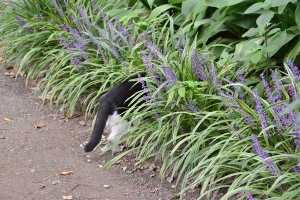 Cat Tail and Tiny Purple Flowers
