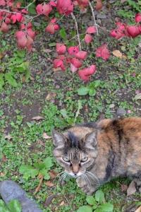 Cat and Burning Bush