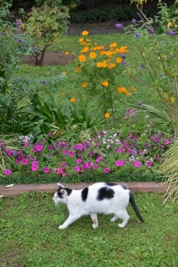 Cat Walking By Flowers