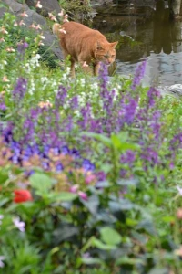 Cat and Flowers