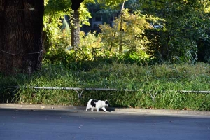 Cat In The Early Autumn Sunlight