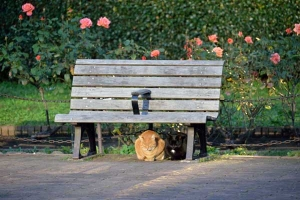 Bench Cats and Roses