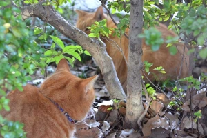 Brother Cats in the Bush
